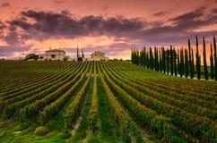 葡萄园在翁布里亚,意大利 库存照片