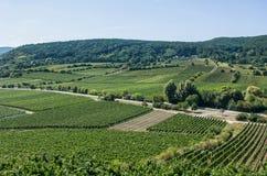 葡萄园在莱茵河流域巴列丁奈特 免版税图库摄影