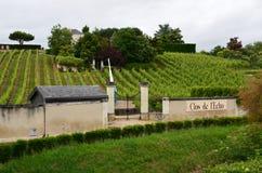 葡萄园在著名酿酒区域-卢瓦尔河流域 库存图片