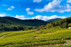 葡萄园在阿尔萨斯 免版税库存照片