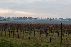葡萄园在阿西西 免版税库存照片