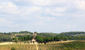 葡萄园在Badia di Passignano,托斯卡纳,意大利 库存照片