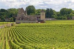 葡萄园在Bourgogne,法国村庄。 库存照片