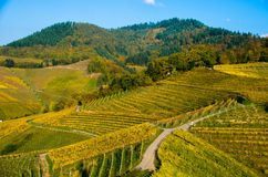 葡萄园在Ortenau地区在德国 免版税库存照片