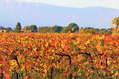 葡萄园培养的领域在乡下 免版税库存照片