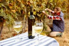 葡萄园家庭传统-葡萄酒产品  免版税库存照片