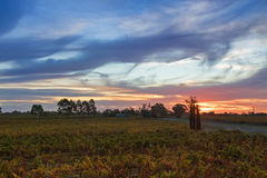 葡萄园日落视图在Coonawarra酿酒厂regi的晚上 图库摄影