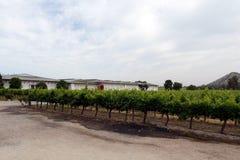 葡萄园智利酿酒厂圣丽塔 免版税库存图片