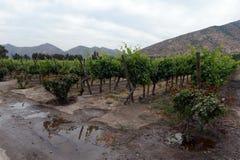 葡萄园智利酿酒厂圣丽塔 免版税库存照片