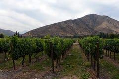 葡萄园智利酿酒厂圣丽塔 库存照片