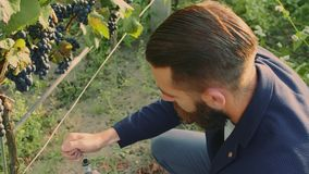 葡萄园的人有在绿色葡萄园的特别仪器身分的 影视素材
