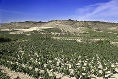 葡萄园的域 免版税图库摄影