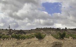 葡萄园的域 免版税库存照片