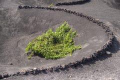 葡萄园的耕种  免版税库存图片