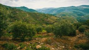 葡萄园的顶视图是在小山,杜罗河谷 库存图片
