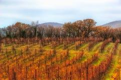 葡萄园秋天山Abrau杜尔索克拉斯诺达尔地区俄罗斯 库存照片