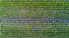 葡萄园空中顶视图环境美化从背景,法国上 免版税库存图片