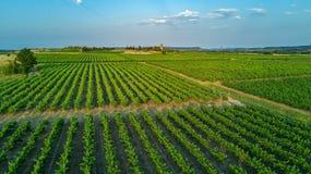 葡萄园空中顶视图环境美化从背景,法国上 免版税库存照片