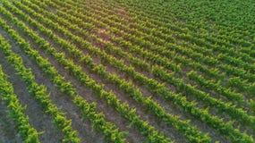 葡萄园空中顶视图环境美化从背景,法国上 免版税图库摄影