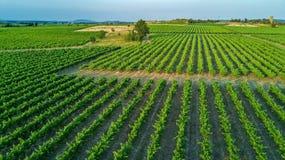葡萄园空中顶视图环境美化从背景,法国上 库存照片