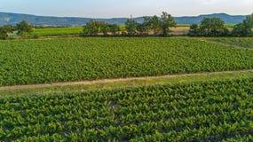 葡萄园空中顶视图环境美化从背景,法国上 库存图片