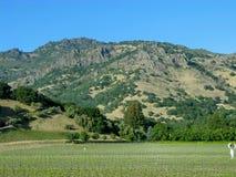 葡萄园纳帕谷加州 库存图片