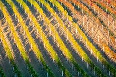 葡萄园葡萄树行  秋天五颜六色的德国横向莱茵河谷葡萄园 南摩拉维亚的葡萄葡萄园在捷克 好的n 库存图片