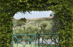 葡萄园视图通过树荫处 免版税库存图片