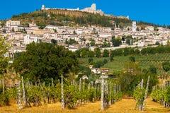 葡萄园轰鸣声Rocca Maggiore在翁布里亚,在热的Su期间的Assisi 免版税图库摄影