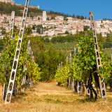 葡萄园轰鸣声Rocca Maggiore在翁布里亚, Assisi在期间 免版税库存图片