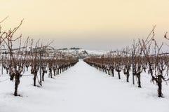 葡萄园雪的风景 库存照片