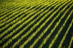 葡萄园风景在托斯卡纳,意大利 图库摄影