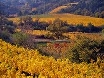 葡萄园风景在秋天 免版税库存照片