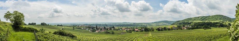 葡萄园风景在巴尔附近村庄的区域阿尔萨斯  免版税库存图片