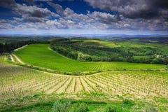 葡萄园风景在Toscany,意大利 库存图片