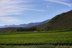 葡萄园风景开普敦酒路线庭院路线 库存图片
