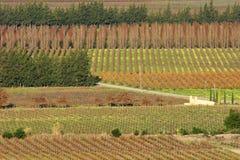 葡萄园风景,南非 免版税库存图片