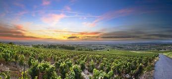 葡萄园,博若莱红葡萄酒,罗讷,法国全景日出时间的 图库摄影