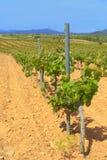 葡萄园,卡塔龙尼亚,西班牙 免版税库存照片