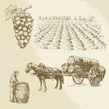 葡萄园,收获,农场 皇族释放例证