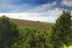 葡萄园,阿斯蒂,山麓,意大利 免版税库存图片