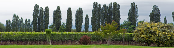 葡萄园, Lujan de Cuyo, Mendoza 免版税库存照片