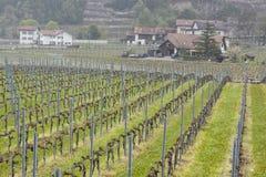 葡萄园-埃格勒,瑞士 库存图片