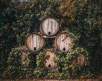 葡萄园 桶在围场之间的酒 免版税库存照片