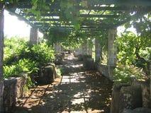 葡萄园 库存图片