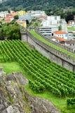 葡萄园Castelgrande 免版税库存图片