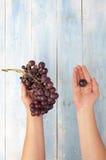 葡萄在蓝色木板的手上 免版税库存图片