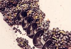 葡萄在藤的按,紫色过滤器 库存图片