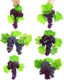 葡萄拼贴画与叶子的。 查出 库存照片
