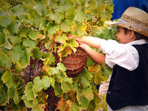 葡萄收获的节日 免版税库存图片